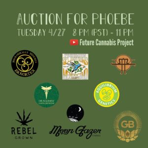 Auction for Phoebe